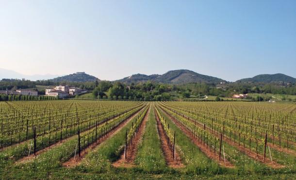 Consorzio Vini Asolo e Montello