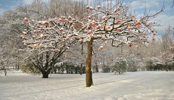 La natura inverno