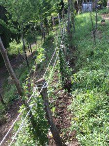 Orto biodinamico Asolo Mora e Ribes