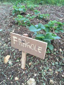 Orto Biodinamico Fragole Asolo