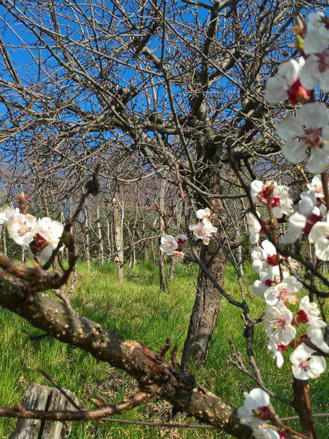 Primavera del Prosecco 17